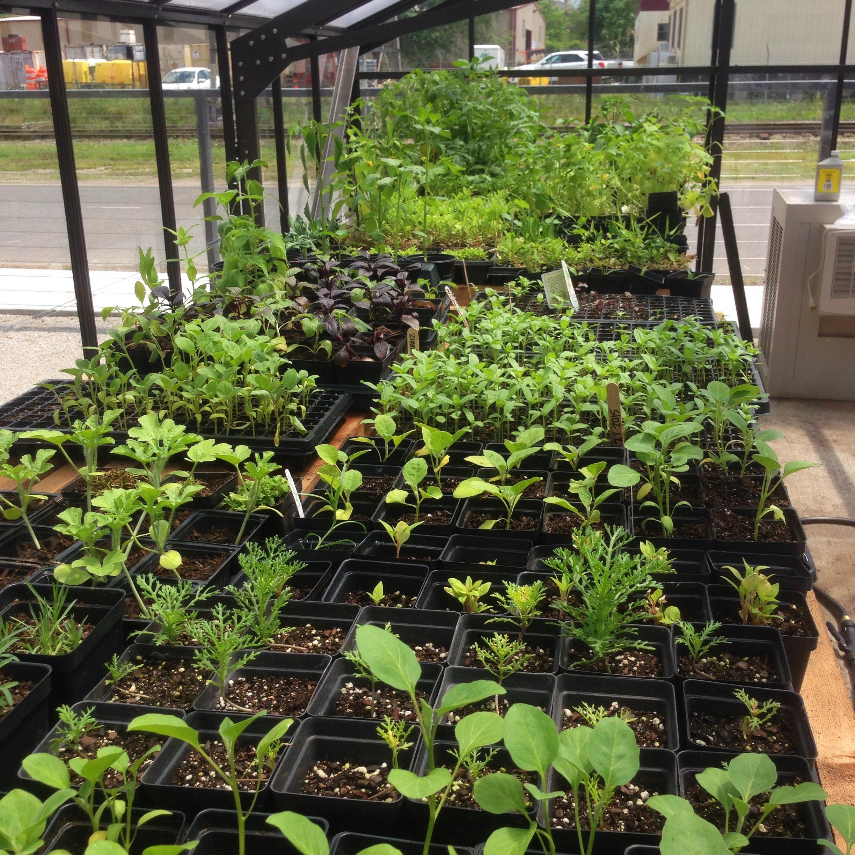 Press Street Gardens' Plant Share